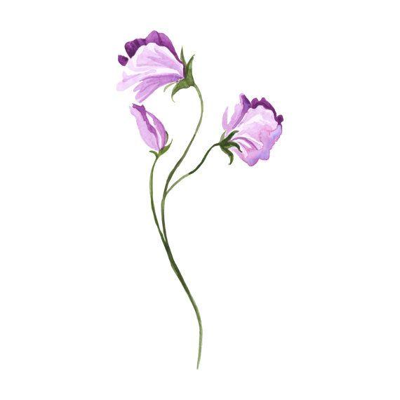 Acquerello pisello dolce tatuaggio  Flower Tattoo  di InsanityINK