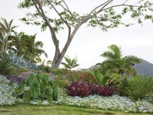tropical - love it!: Gardens Ideas, Caribbean Hotels, Tropical Design, Tropical Plants, Tropical Gardens, Marden Caribbean, Brice Marden, Gardens Design, Raymond Jungles