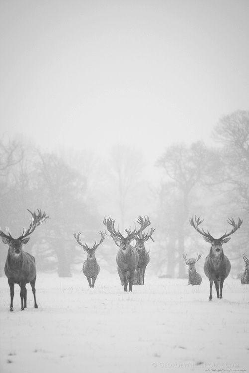Mens Cotton Pocket Square - snow sleigh deer purple by VIDA VIDA l0KY1