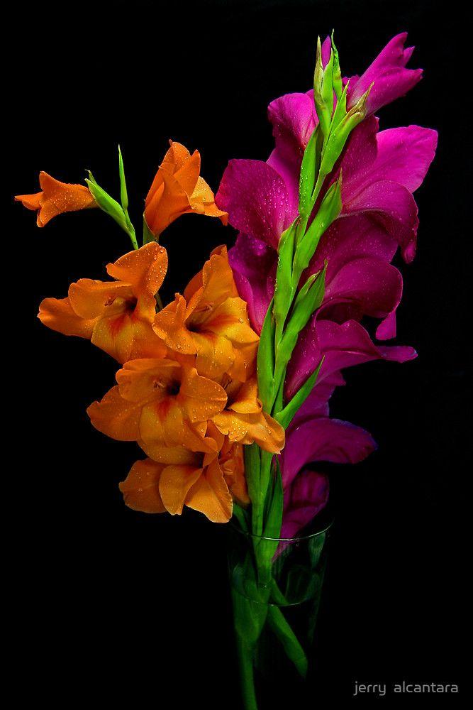 «Contrasting Colors» de jerry  alcantara