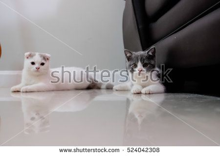 Two baby cat laying on the ground. selective and soft focus.
