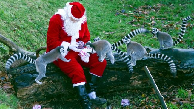 edinburgh zoo merry christmas penguin
