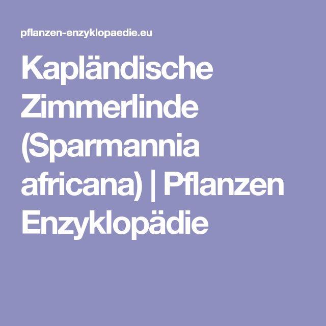 Kapländische Zimmerlinde (Sparmannia africana) | Pflanzen Enzyklopädie