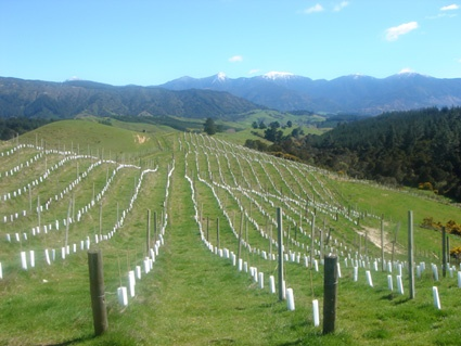 Young vines and snow tipped peaks at Orinoco Vineyard