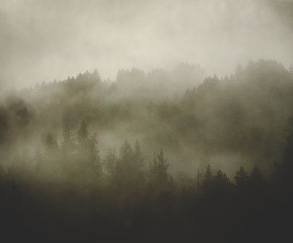 TITLE - redwood morning mist | soft ethereal fog winds its way through the redwood forests of northern California. a black and white fine art photograph