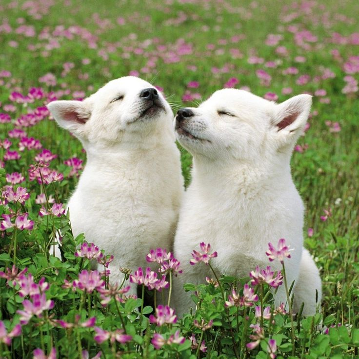 #Puppies just enjoying the day! Psssst... don't wait too long to train your pup right. Click the pic