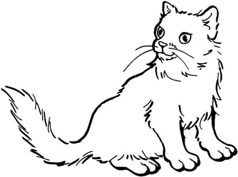 cat 8 coloring page from cats category select from 24114