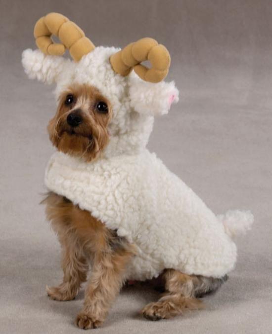 Lustige Hunde in schrägen Kostümen #9