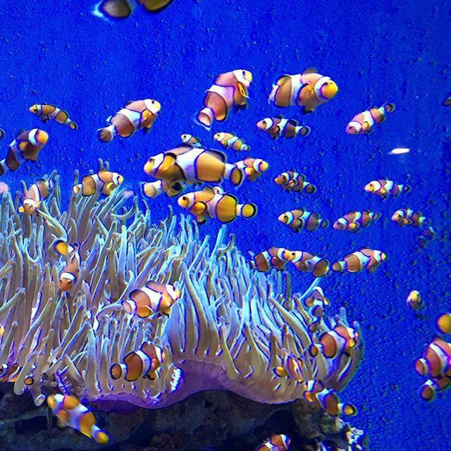 LA VIE AQUATIQUE Flâner à l'aquarium de #Barcelone ✨ #españa #holidays #Barcelona #sun #february #fish #sea #wanderlust #aquarium #blogger #travel #igersbarcelona