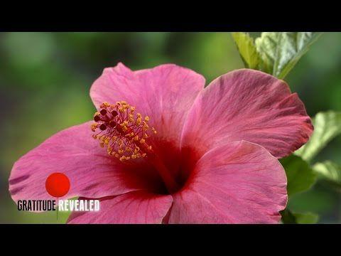 Focus | Gratitude Revealed | Oprah Winfrey Network