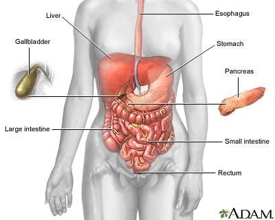 Which Of The Following Is An Accessory Organ Of Digestion 110 Best Digestion Images On Pinterest  Anatomy The Human Body And