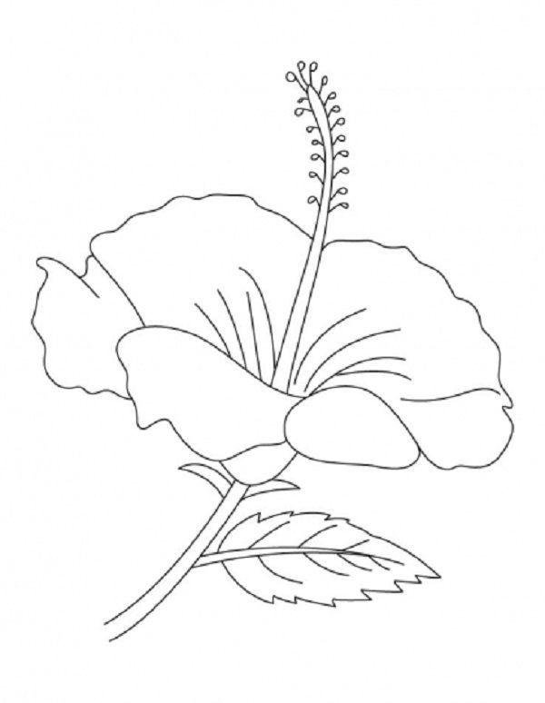 62 besten Flower Bilder auf Pinterest | Exotische blumen, Schöne ...
