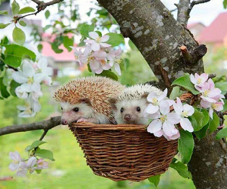 Доброе утро картинки ежик с цветами
