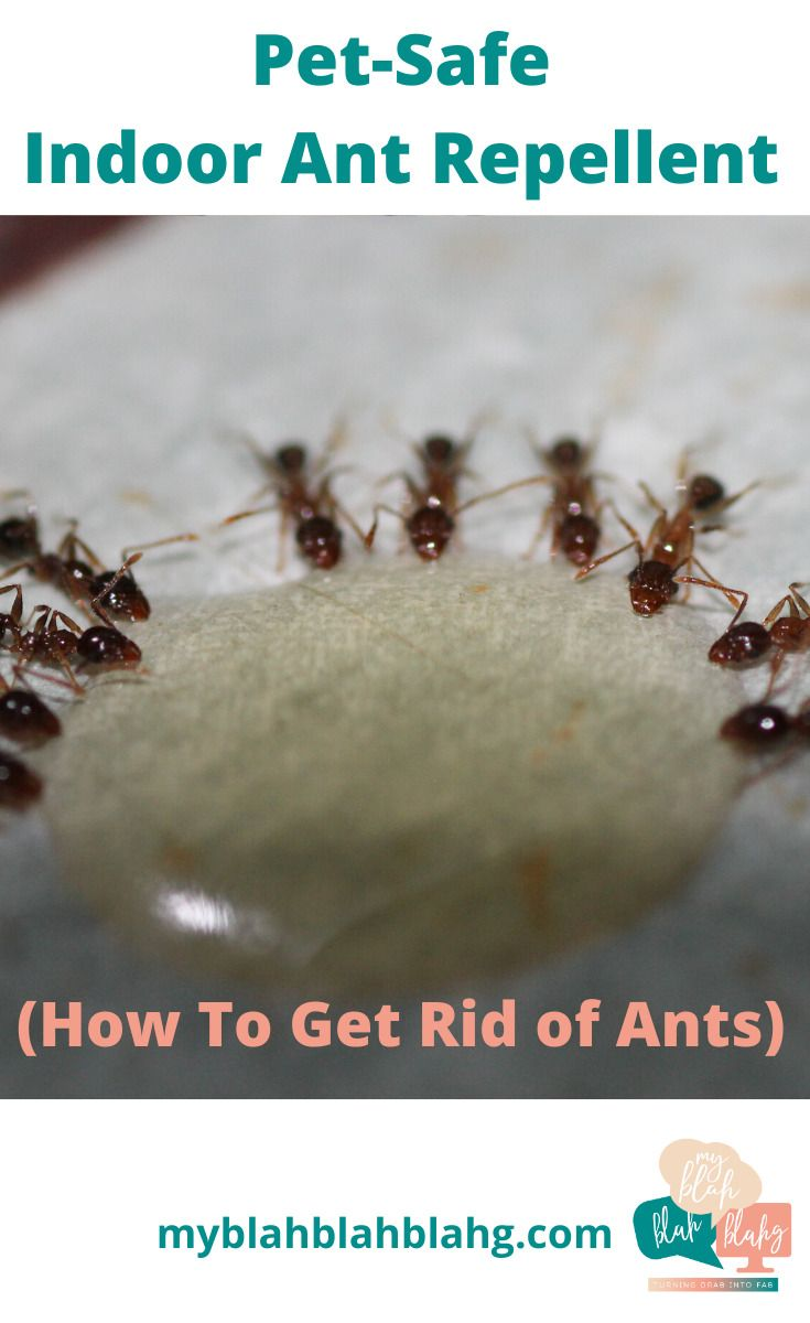 812b87872b14c748554670e0d486fb4d - How To Get Rid Of Ants Safely Around Pets