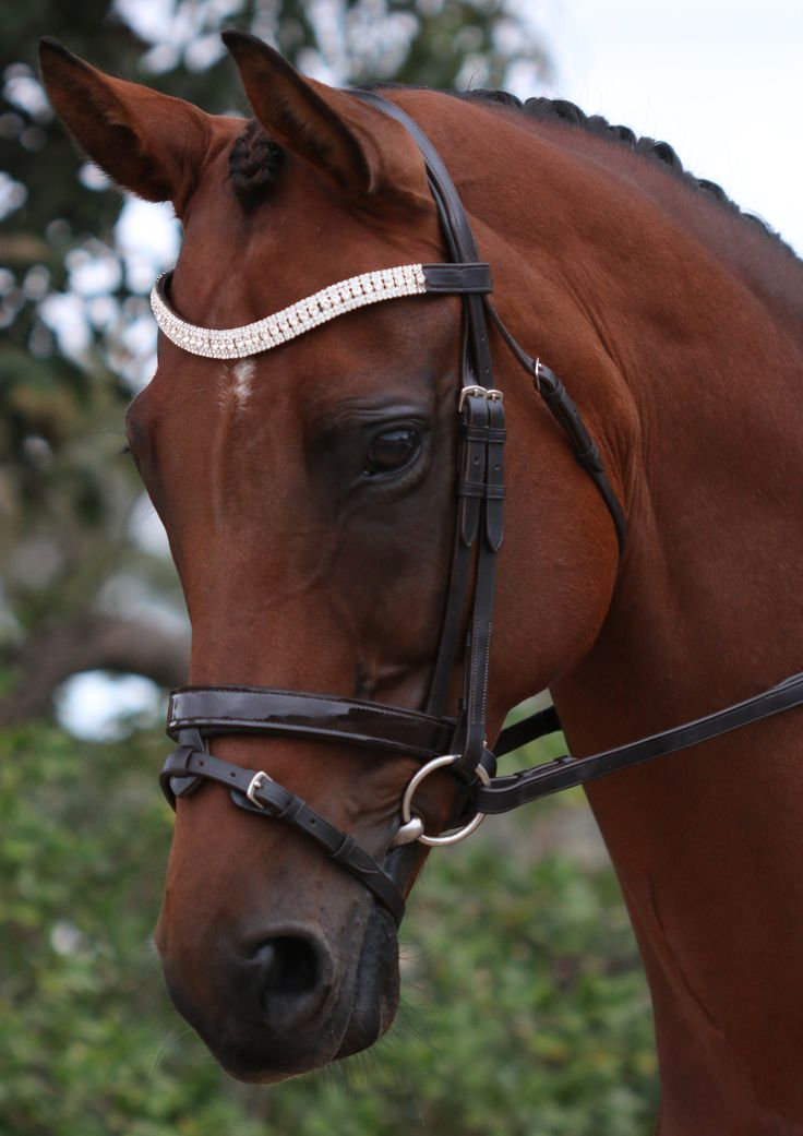 Flexible Fit Equestrian Gel English Leather Stainless Steel Fittings Havana Mix & Match Bridle #ffequestrian#havanaleather#horsebridle