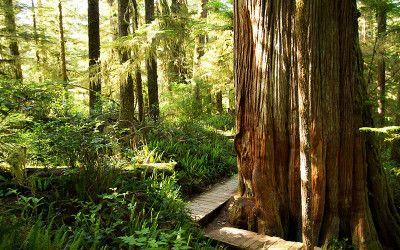 Rainforest Trail, Pacific Rim National Park