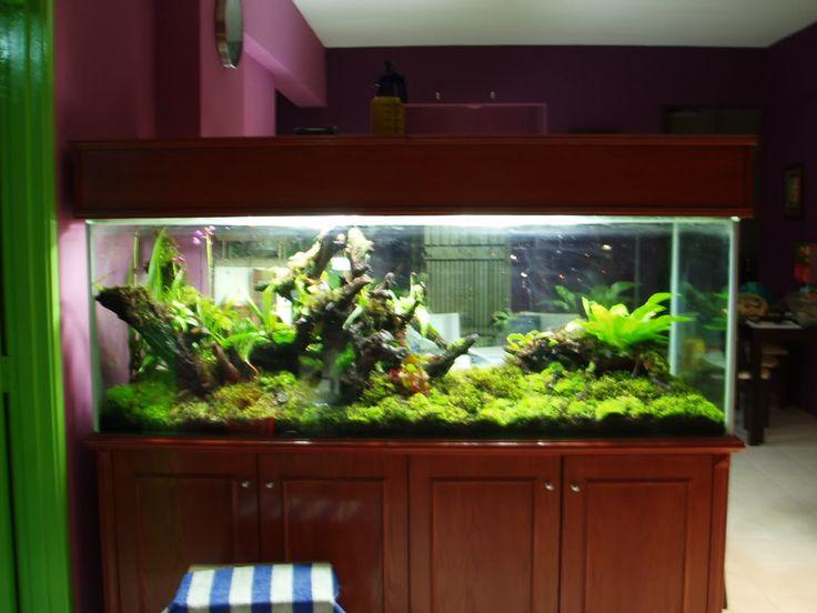 6ft terrarium. - 51 Best Awesome Reptile Terrariums & Vivariums Images On Pinterest