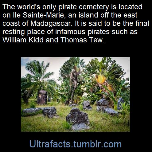 Ultrafacts.tumblr.com
