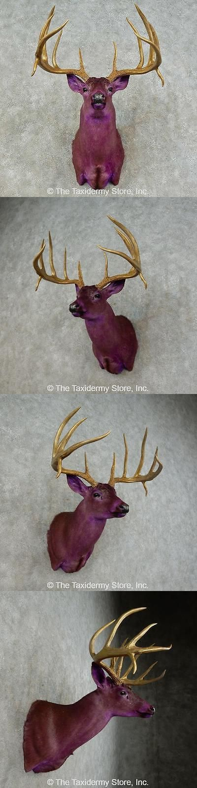 Large Animals 177908: #16241 E+ | Purple Whitetail Deer Taxidermy Shoulder Mount For Sale -> BUY IT NOW ONLY: $1315 on eBay!