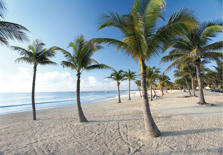 #HELEVIRTURISMO PUERTO AVENTURAS ER BARCELO MAYA GRAND RESORT La spiaggia di sabbia bianca è attrezzata con lettini e teli mare. Nel cuore della Riviera Maya sorge il bellissimo Barcelò Maya Grand Resort, situato in prima linea sul mare davanti ad un tratto di 2 km di spiaggia bianca. Il resort è pensato per chi ricerca un ambiente accogliente e nel contempo informale, dove non mancano le opportunità di divertimento e svago. #PRENOTA o RICHIEDI INFORMAZIONE HELEVIRTURISMO #GOLFODINAPOLI…