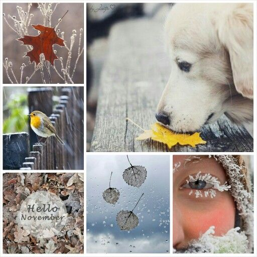 Hello November. #Moodboards #Mosaic #Collage by Jeetje♡