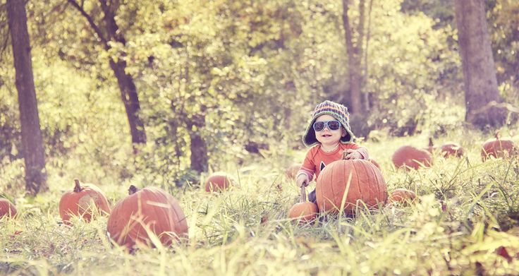 Michigan's Best Apple Orchards and Pumpkin Patches