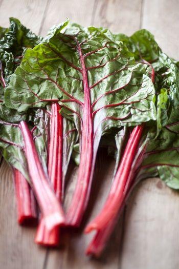 Schatten Garten: Tipps für Pflanzen, Obst und Gemüse
