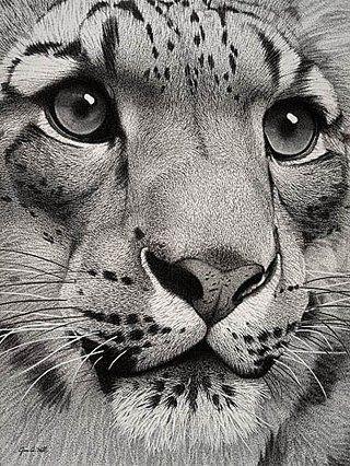 big cat art B&W photo SnowLeopard.jpg