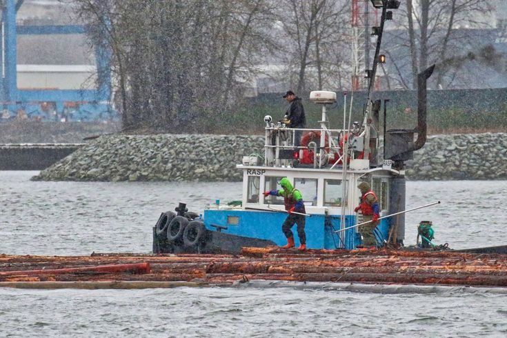 "The crew of Hodder Tugboat Co. Ltd.'s tugboat ""RASP"" work with a log boom in the Fraser River. Click image to enlarge."