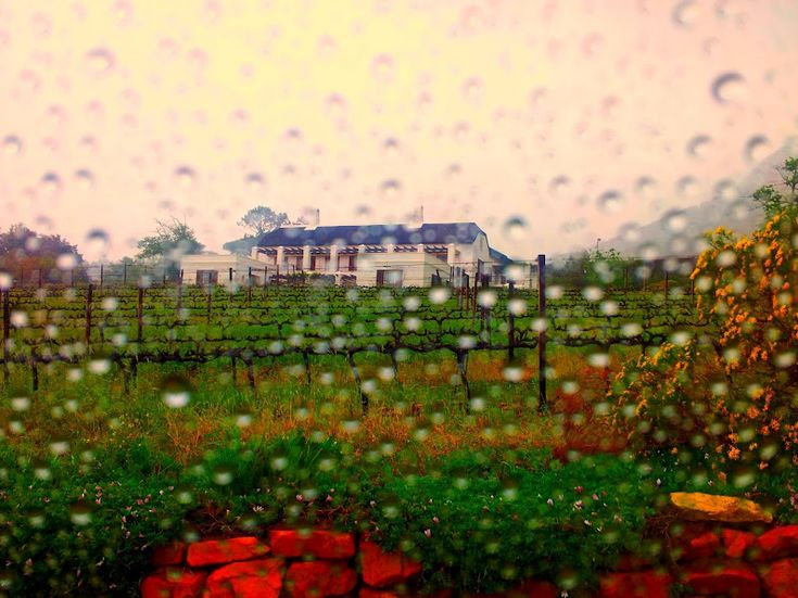Cape Town Wine Tasting Day Trip - Constantia Glen