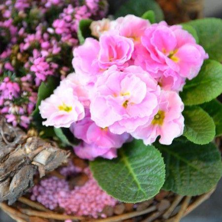 Min oase   ny blogg for alle hageglade! alt om hage, blomster ...