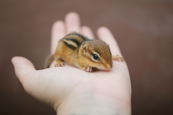 {tiny friend} oh, chipmunks, I love you.