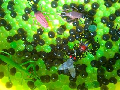 water beads & mini beasts