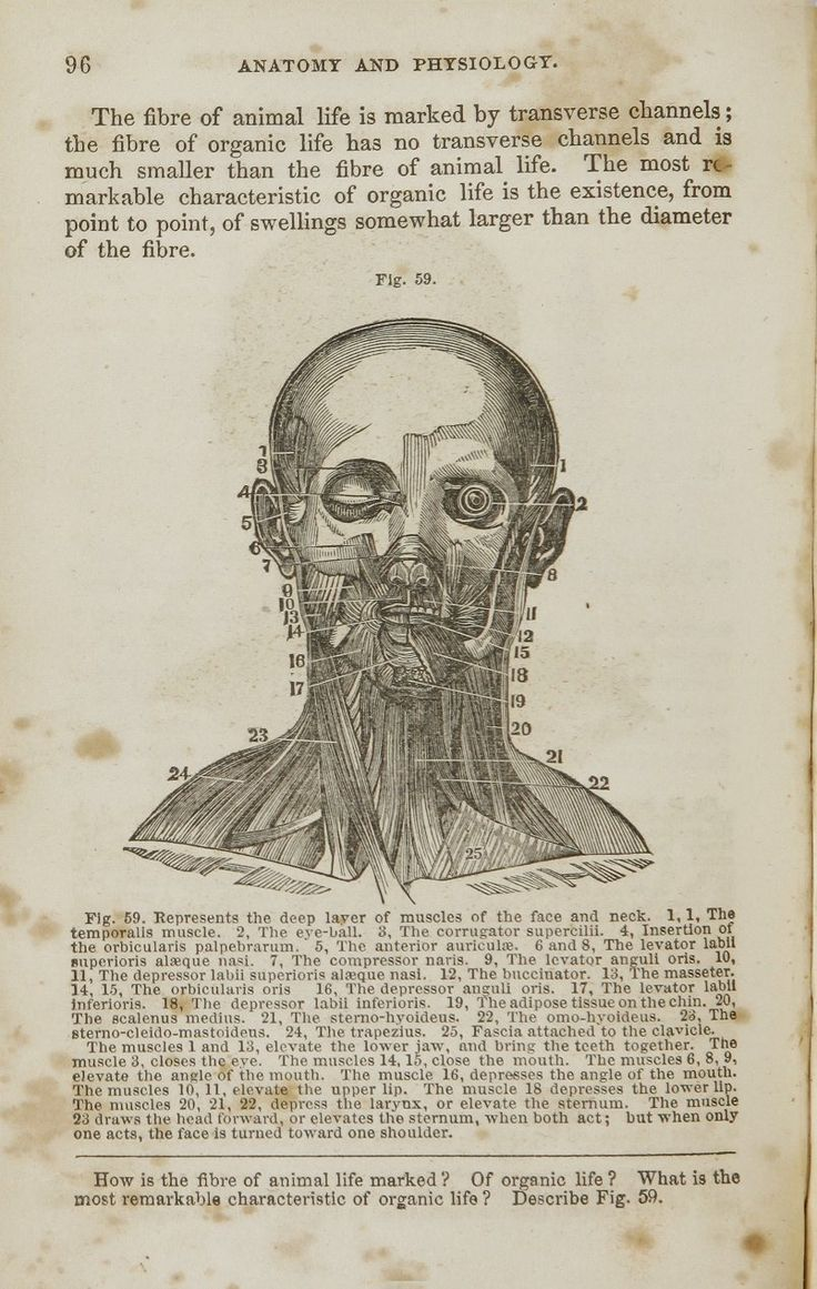 694 best the head and neck images on pinterest sketches anatomy