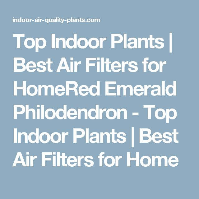 Top Indoor Plants | Best Air Filters for HomeRed Emerald Philodendron - Top Indoor Plants | Best Air Filters for Home