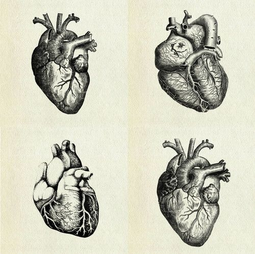Human Heart Black And White Heart inspiration search