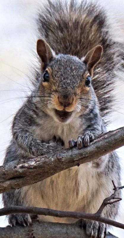 """Hi! Welcome to """"Feelin' Squirrely.""""  Please feel free to comment..."""