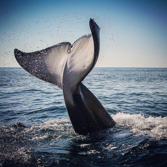 Photo by @xgalalpagos on Instagram. A beautiful, powerful Picture. For The Orca! May They Swim Wild and Free Forever!