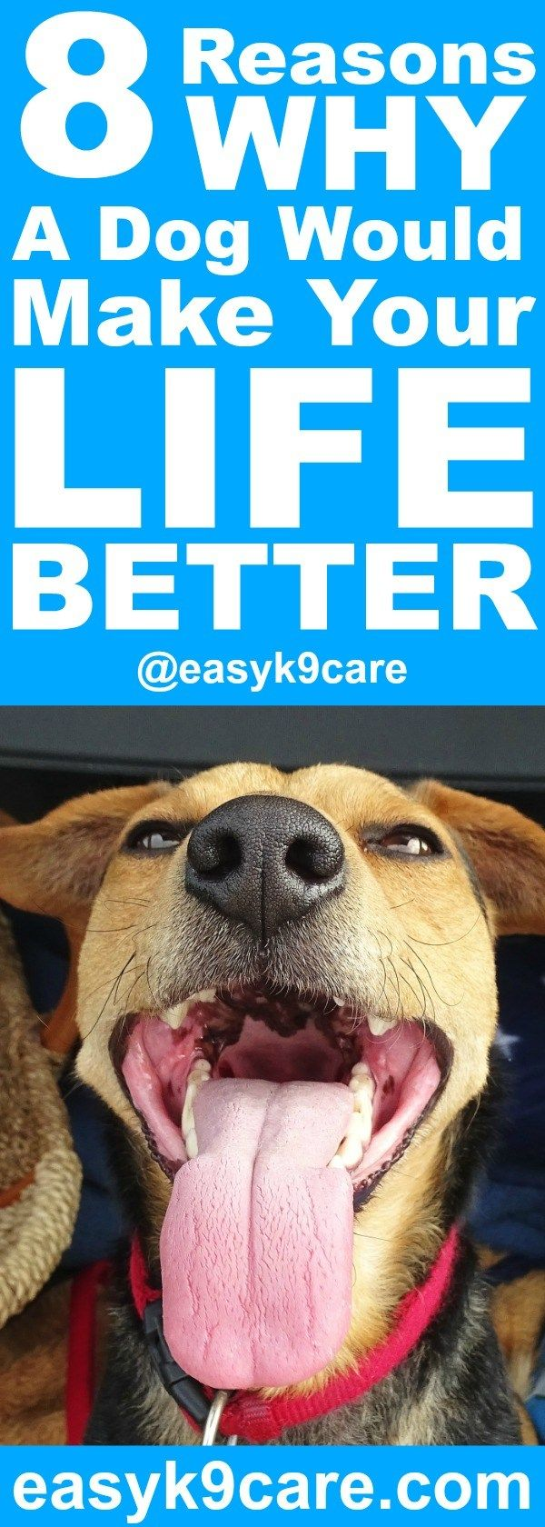 8 Reasons Why a Dog Would Make Your Life Better | Are you considering adding a dog to your family? Maybe you're considering adding another dog to your life (in which case, you should check out my post on How to Successfully Introduce a New Member of the Pack). Dogs are amazing and can be a great new addition to your life. Here are 8 reasons why a dog would make your life better:
