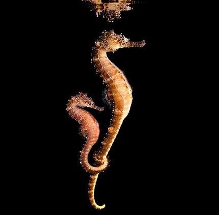 Sea: fantásticas fotos de seres marinhos clicadas por Mark Laita