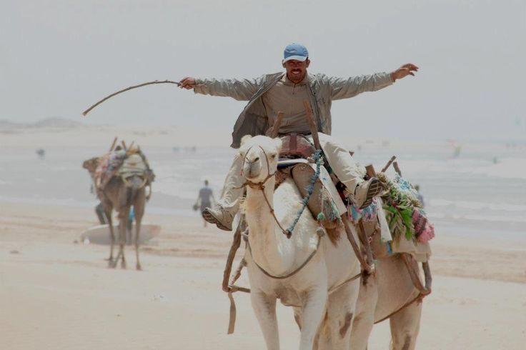 on the camel #speziandocondardarma