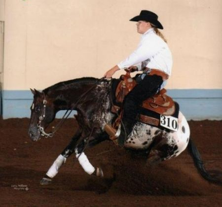 Horse Details - Appaloosa Horses for Sale