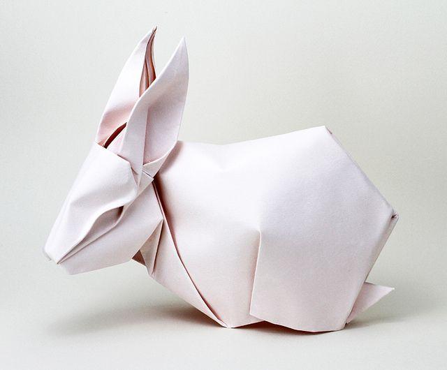 全部尺寸   rabbit, via Flickr.