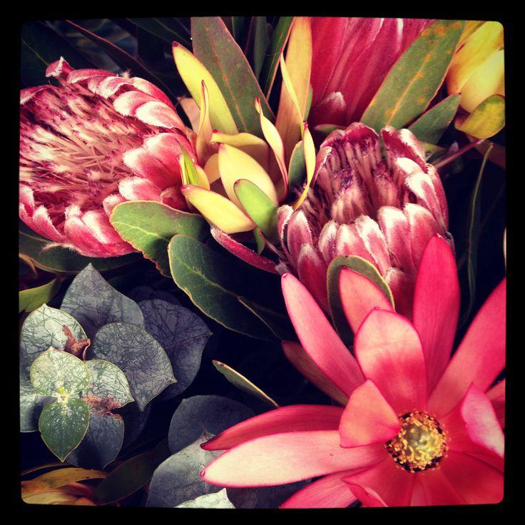 We sell flowers! Beautiful Australian natives