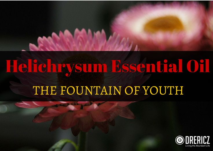 Helichrysum Essential Oil the Fountain of Youth - DrEricZ.comDrEricZ.com