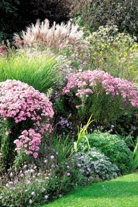 Grands bouquets d'asters en massif<br />F. Boucourt - Rustica - Pépinières A. Breuvart