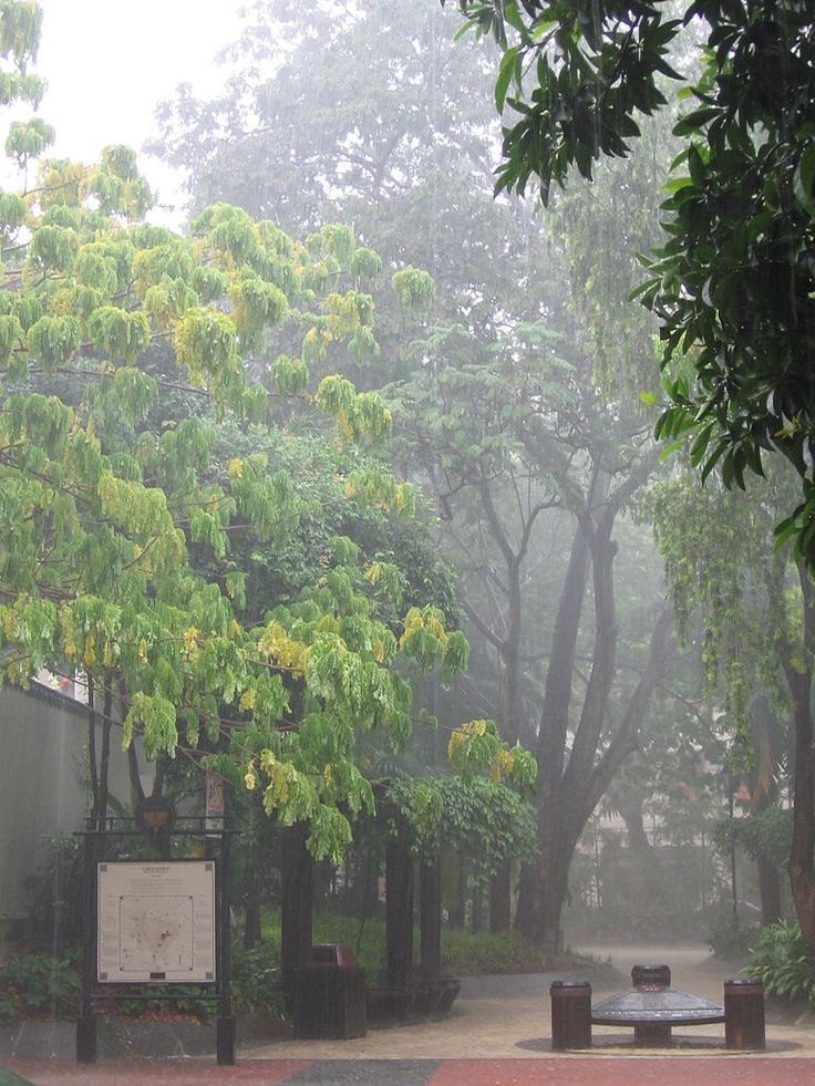 Afternoon thunderstorms are a frequent occurrence in Singapore, which has a tropical rainforest climate.