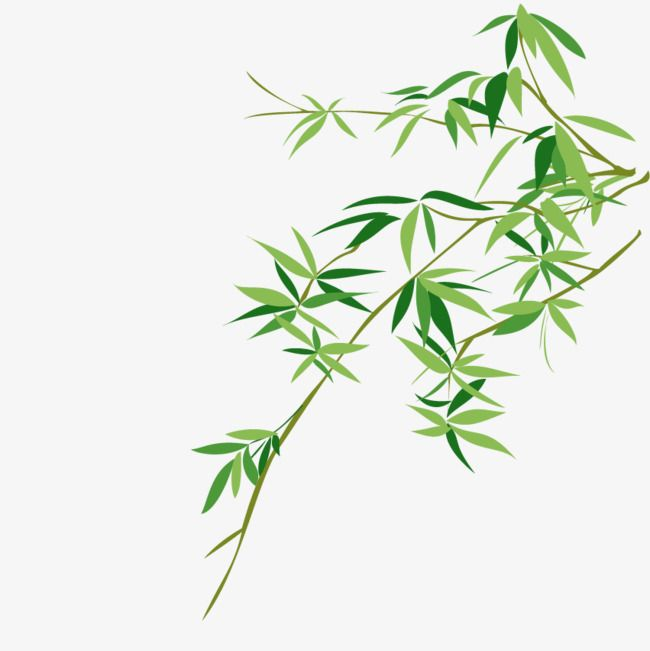 Vector Bamboo Green Bamboo Leaf Png Transparent Clipart Image And Psd File For Free Download Free Clip Art Cartoon Leaf Clip Art