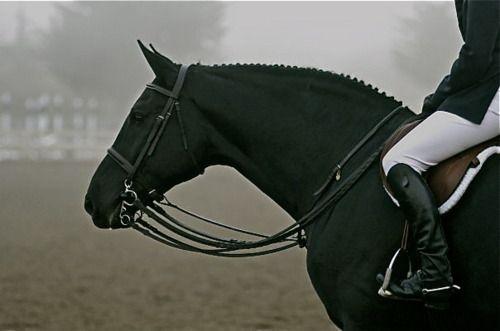I love black horses <3