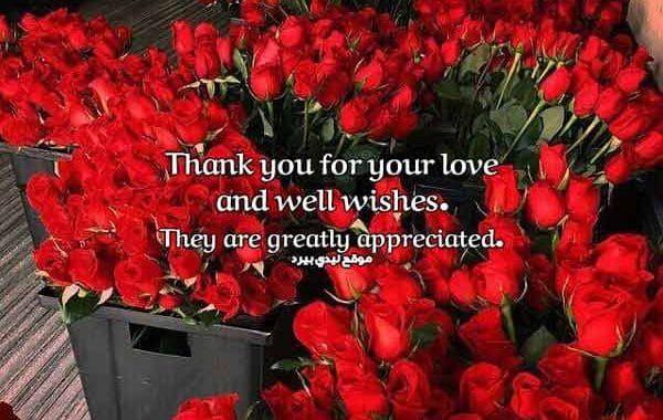 الرد على تهنئة عيد الميلاد بالانجليزي وبالفرنسية Appreciation Plants Love You
